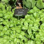 2021年5月25日  夏野菜の季節です